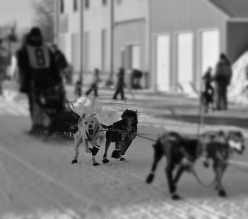 American Dog Derby 2009, Ashton, Idaho